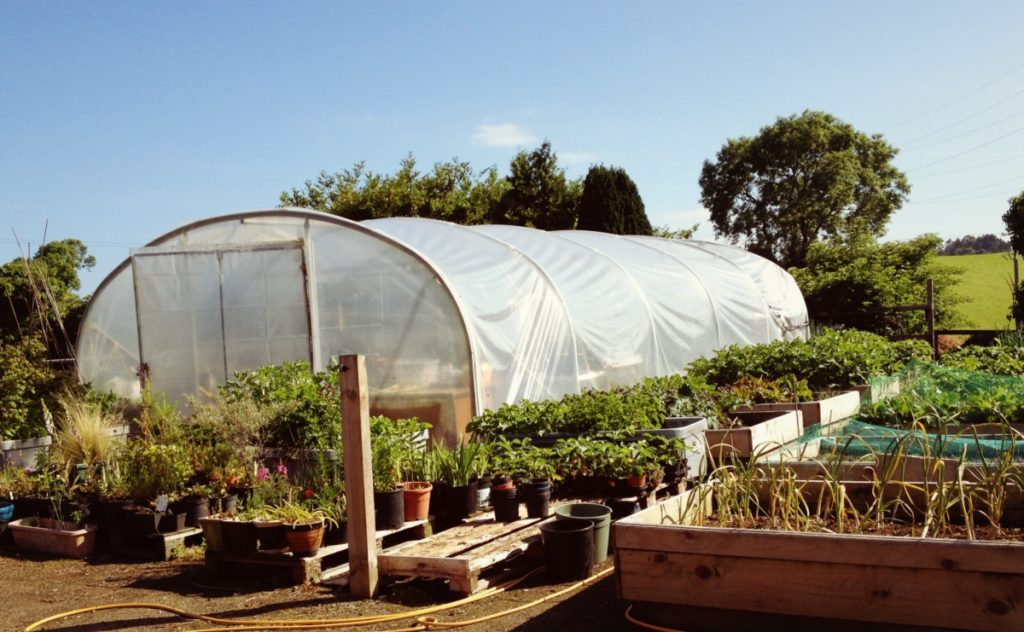 Poly tunnel and raised beds in summer